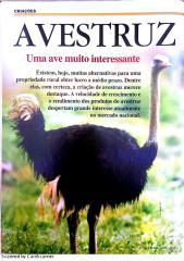 Avestruz uma ave muito interessante.pdf